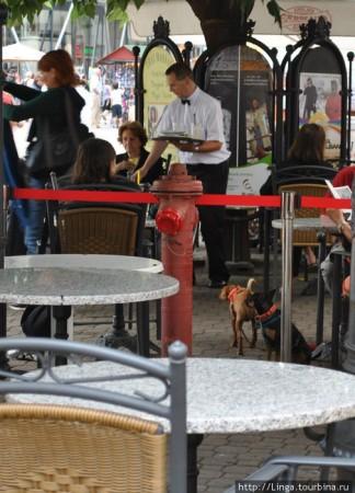 Кафе Жербо ив Будапеште