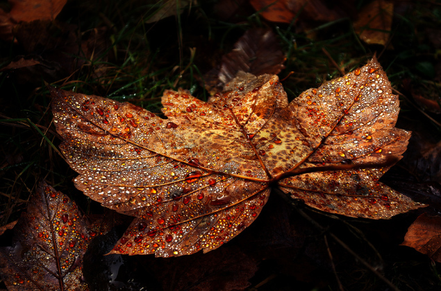 Autumn Remembrance pt.06 by Zsolt Zsigmond (www.realitydream.hu)