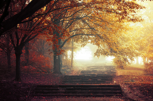 Autumn Walk pt.17 by Zsolt Zsigmond (www.realitydream.hu)