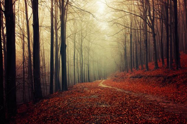 Autumn Walk pt.32 by Zsolt Zsigmond (www.realitydream.hu)