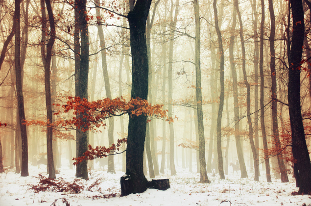 Winter Woods pt.09 by Zsolt Zsigmond (www.realitydream.hu)