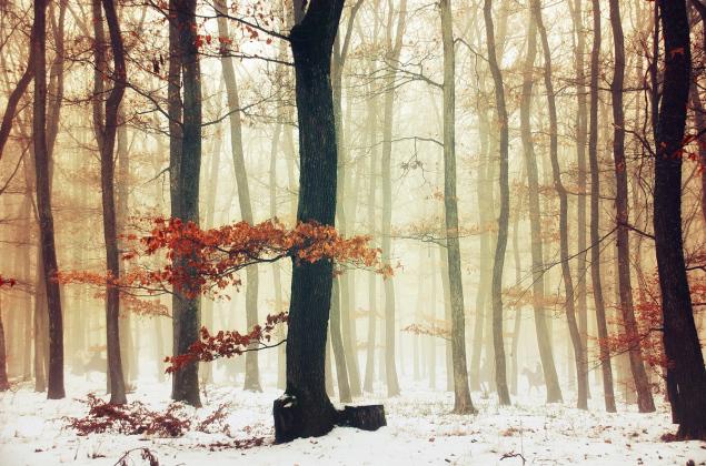Winter Woods pt.09 by Zsolt Zsigmond (www.realitydream.hu)